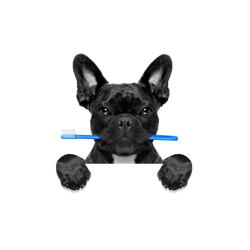 Brosse à dents pour chiens et chats